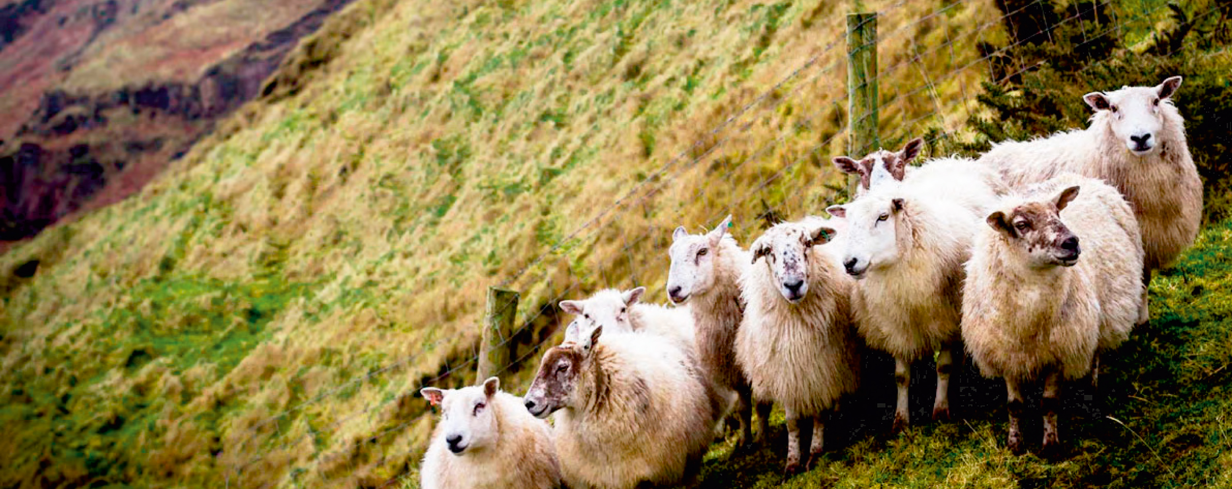Dansk Wilton carpet solutions are made with wool from New Zealand sheep