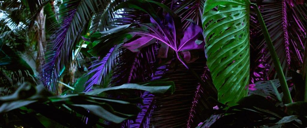 Jungle Carpet inspiration - Dansk Wilton