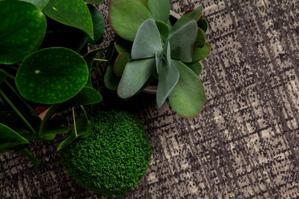 Carpet Design Inspiration - Green Plants - Black And Sand Coloured Carpet -ORIGIN - Dansk Wilton
