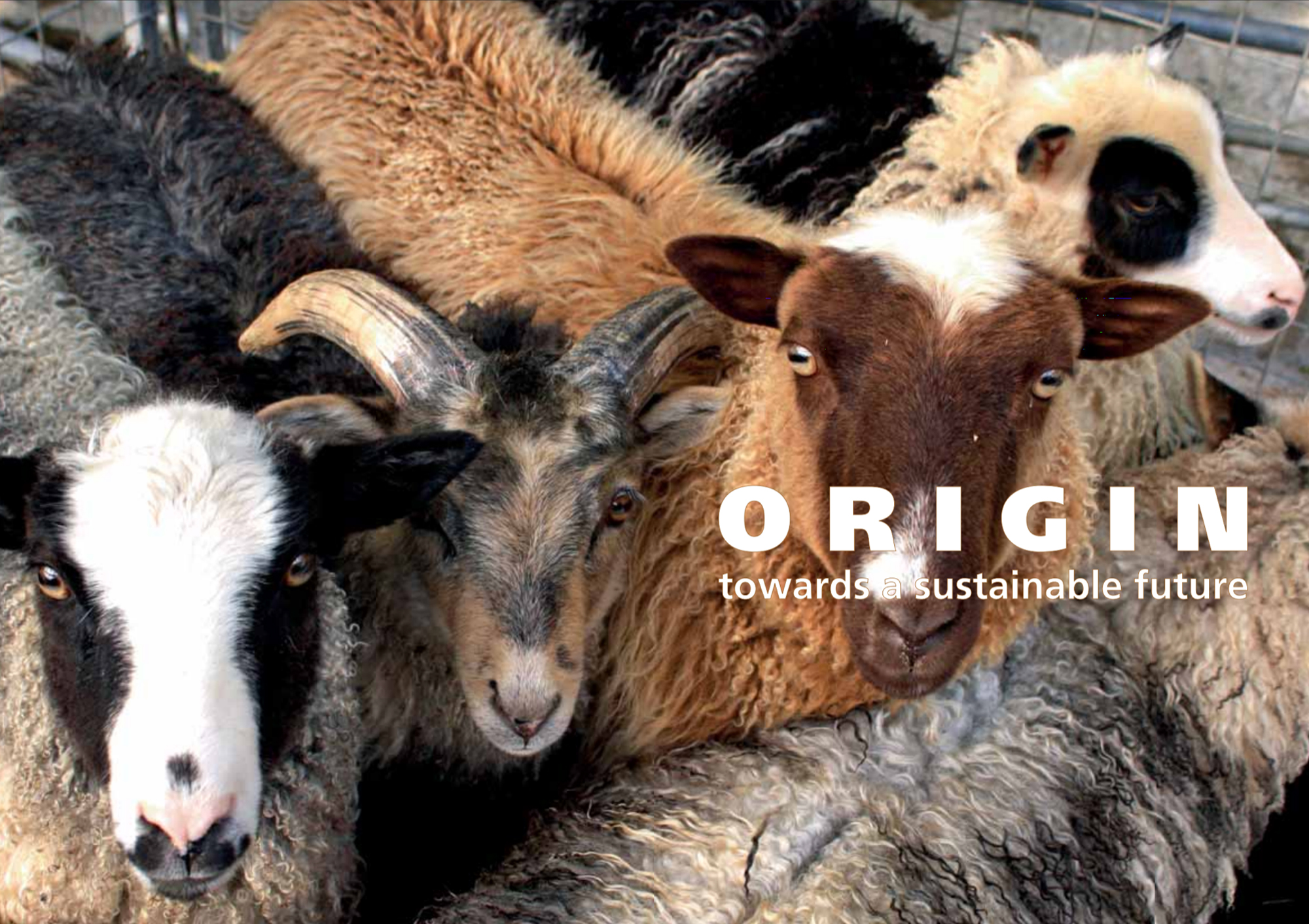 Natural Coloured Sheep - ORIGIN - Tekst - Dansk Wilton - Luxury Carpets